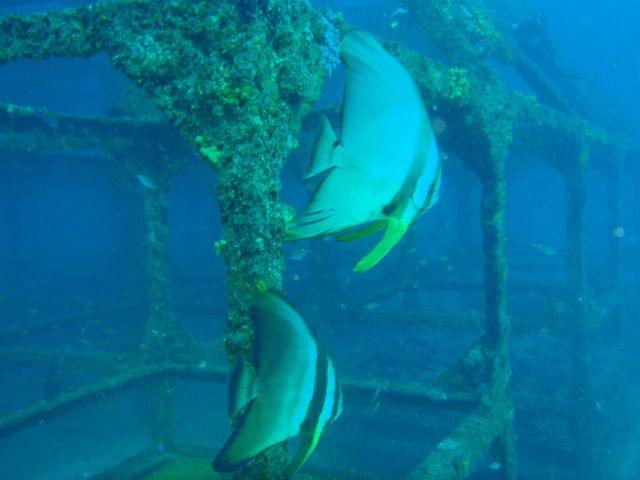 http://www.aquamarine-dive.net/blog/index.html/2013/11/19/PB163227.jpg