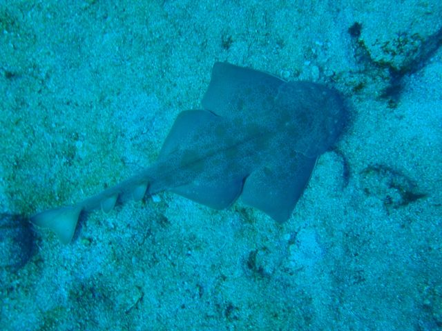 http://www.aquamarine-dive.net/blog/index.html/2013/12/29/PC293223.jpg