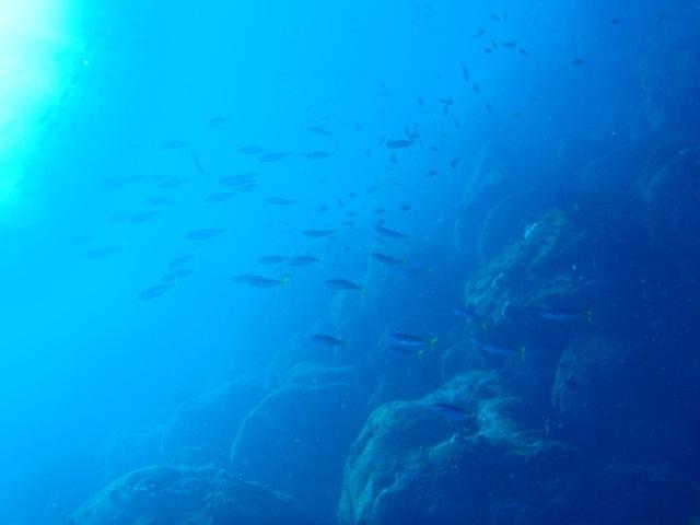 http://www.aquamarine-dive.net/blog/index.html/2014/02/16/P1113252.jpg
