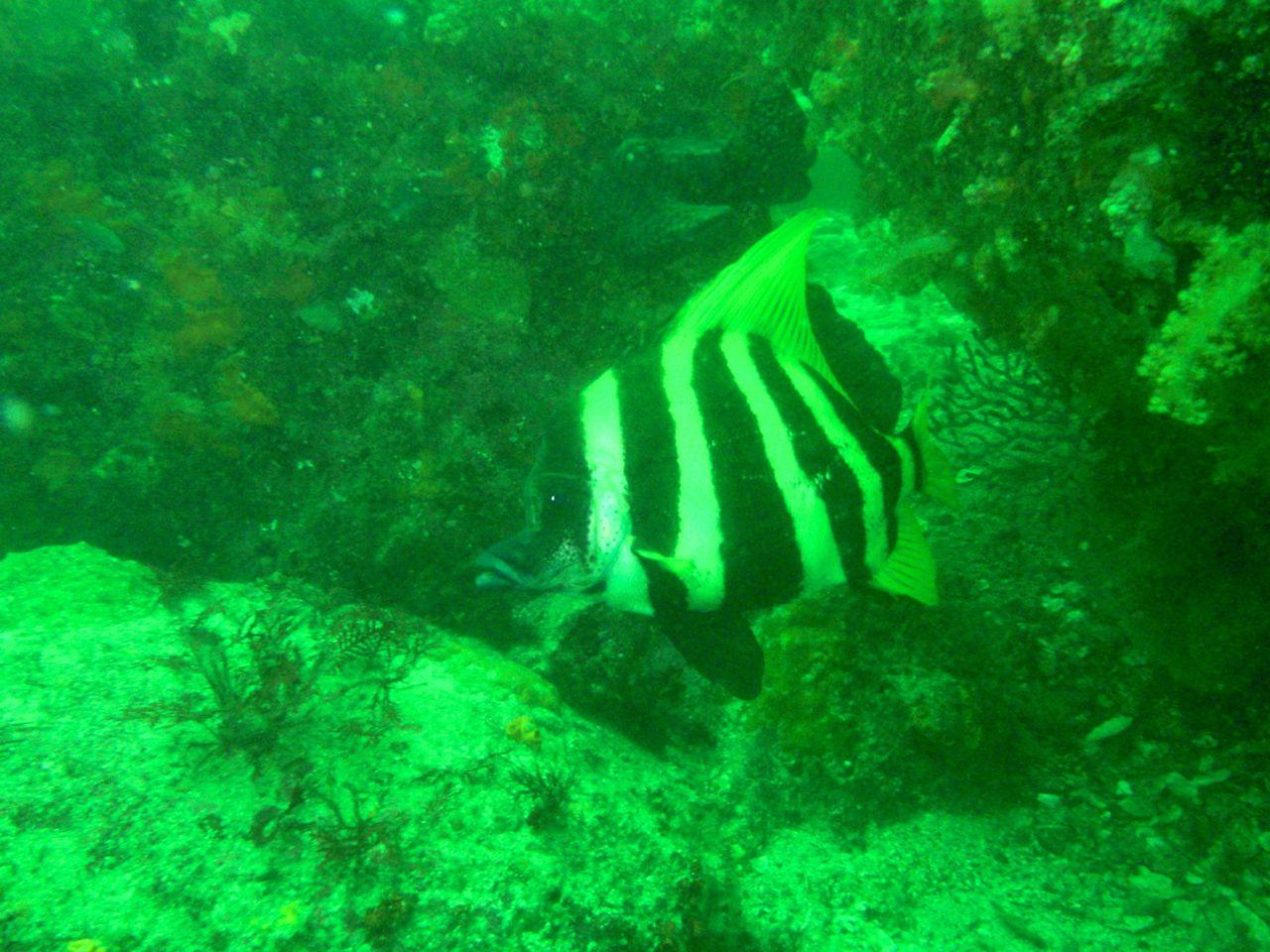 http://www.aquamarine-dive.net/blog/index.html/2014/06/15/P6153234_1.jpg