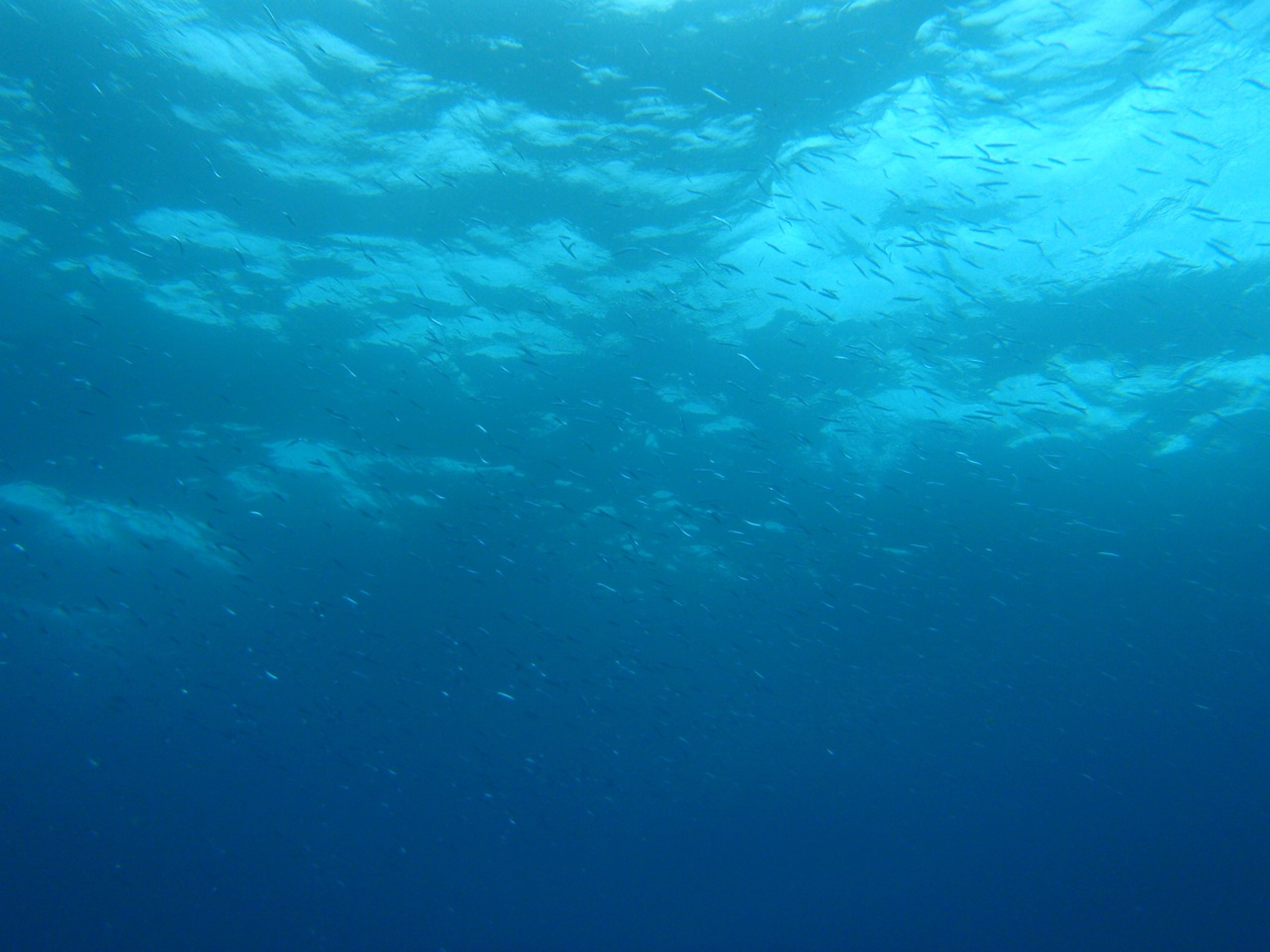 http://www.aquamarine-dive.net/blog/index.html/2014/07/26/PB093250.jpg