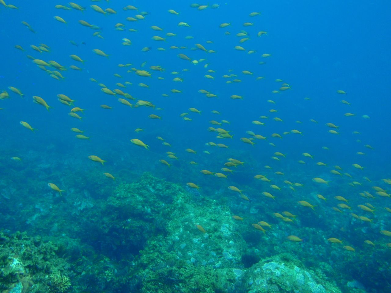 http://www.aquamarine-dive.net/blog/index.html/2014/08/07/P8233203.jpg
