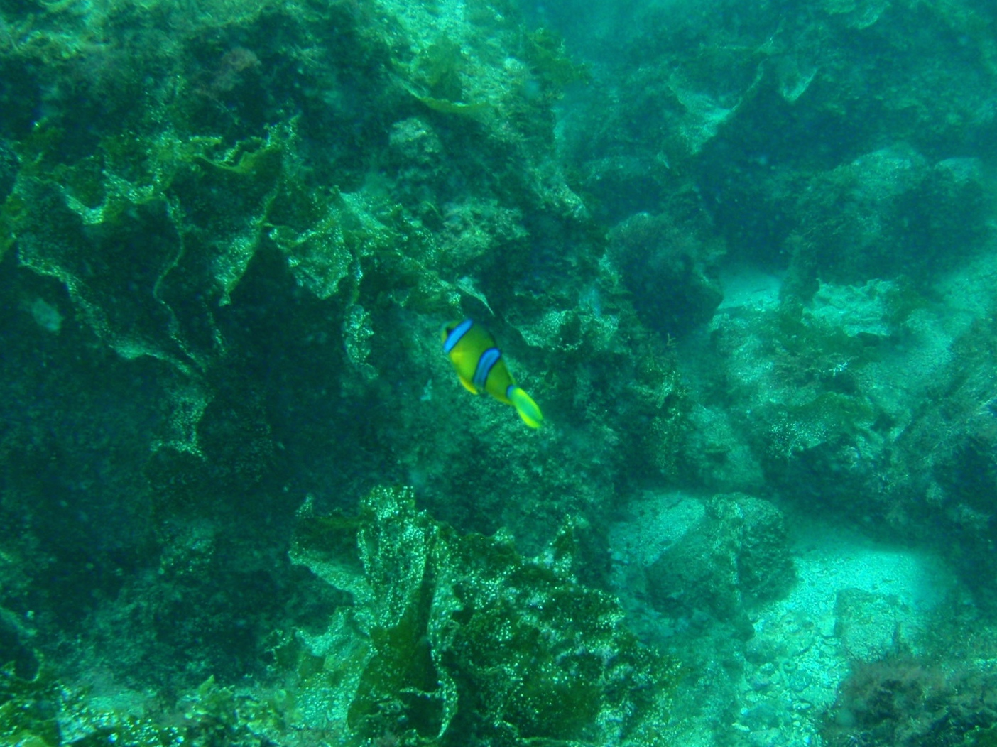 http://www.aquamarine-dive.net/blog/index.html/2014/08/15/P8113223_1.JPG