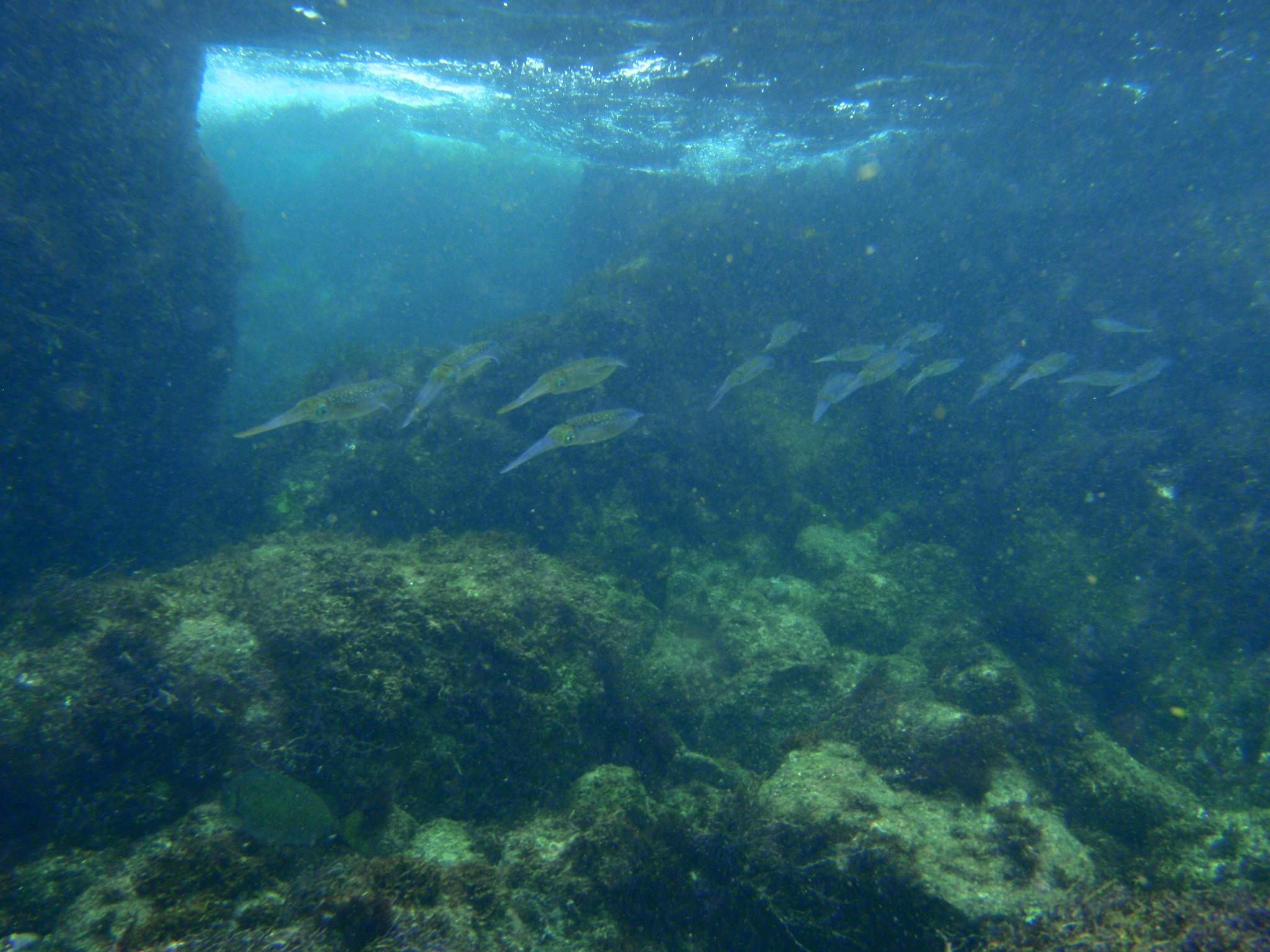 http://www.aquamarine-dive.net/blog/index.html/2014/08/27/P8253233_1.JPG