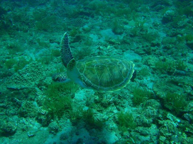 http://www.aquamarine-dive.net/blog/index.html/2015/03/31/P7151873.jpg