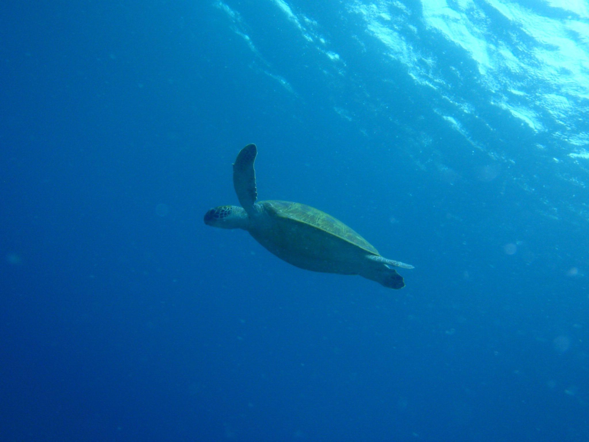 http://www.aquamarine-dive.net/blog/index.html/2015/04/29/P4283226.jpg