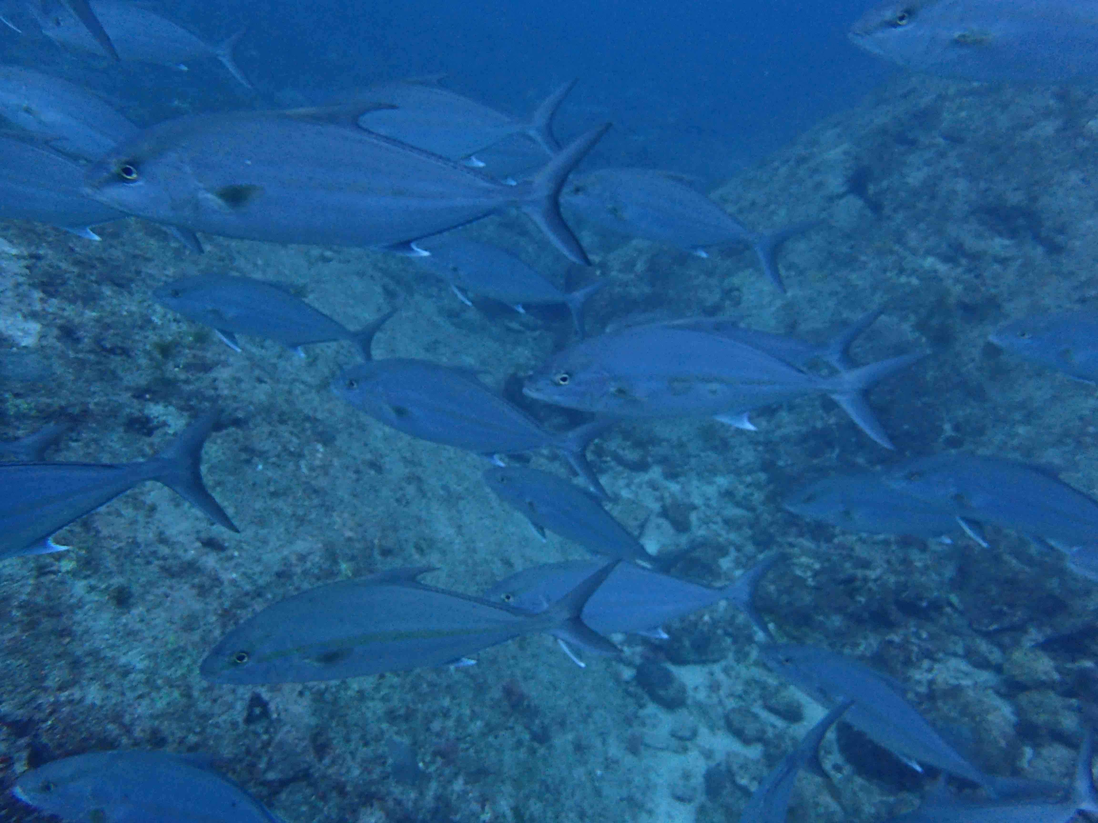 http://www.aquamarine-dive.net/blog/index.html/2015/05/06/P5060023_1.jpg