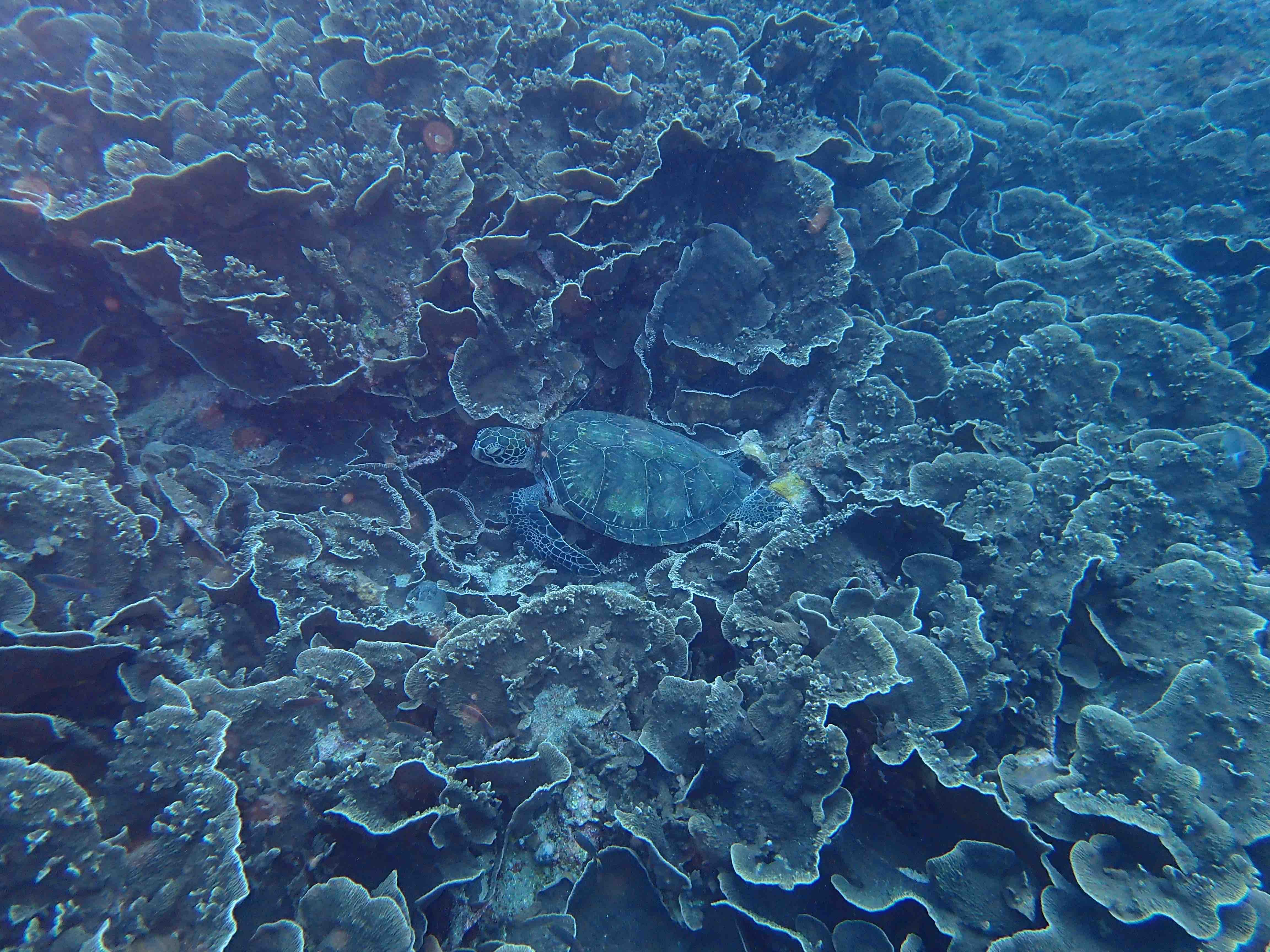 http://www.aquamarine-dive.net/blog/index.html/2015/05/22/P5060010.jpg