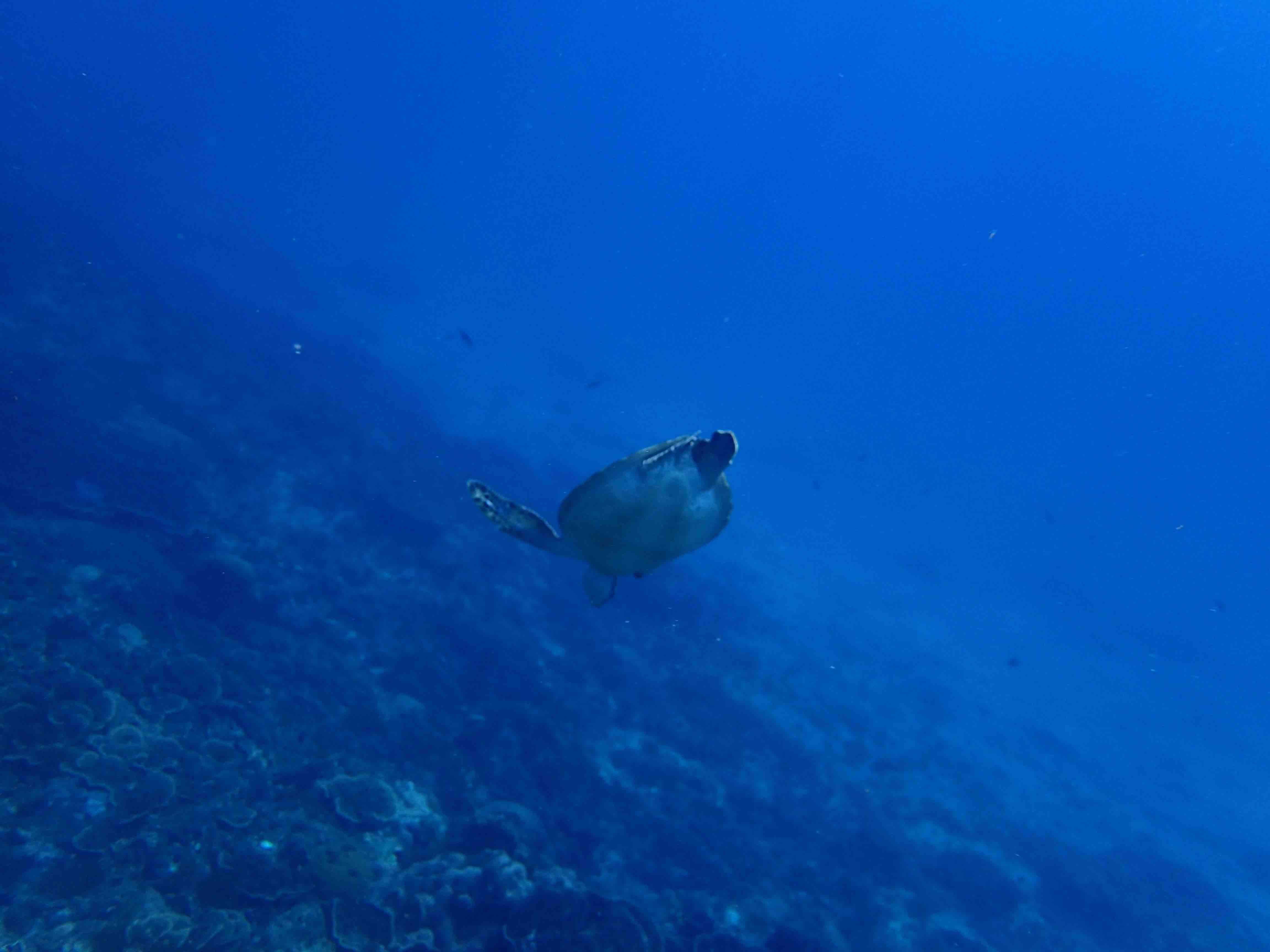 http://www.aquamarine-dive.net/blog/index.html/2015/09/11/P5260238.jpg