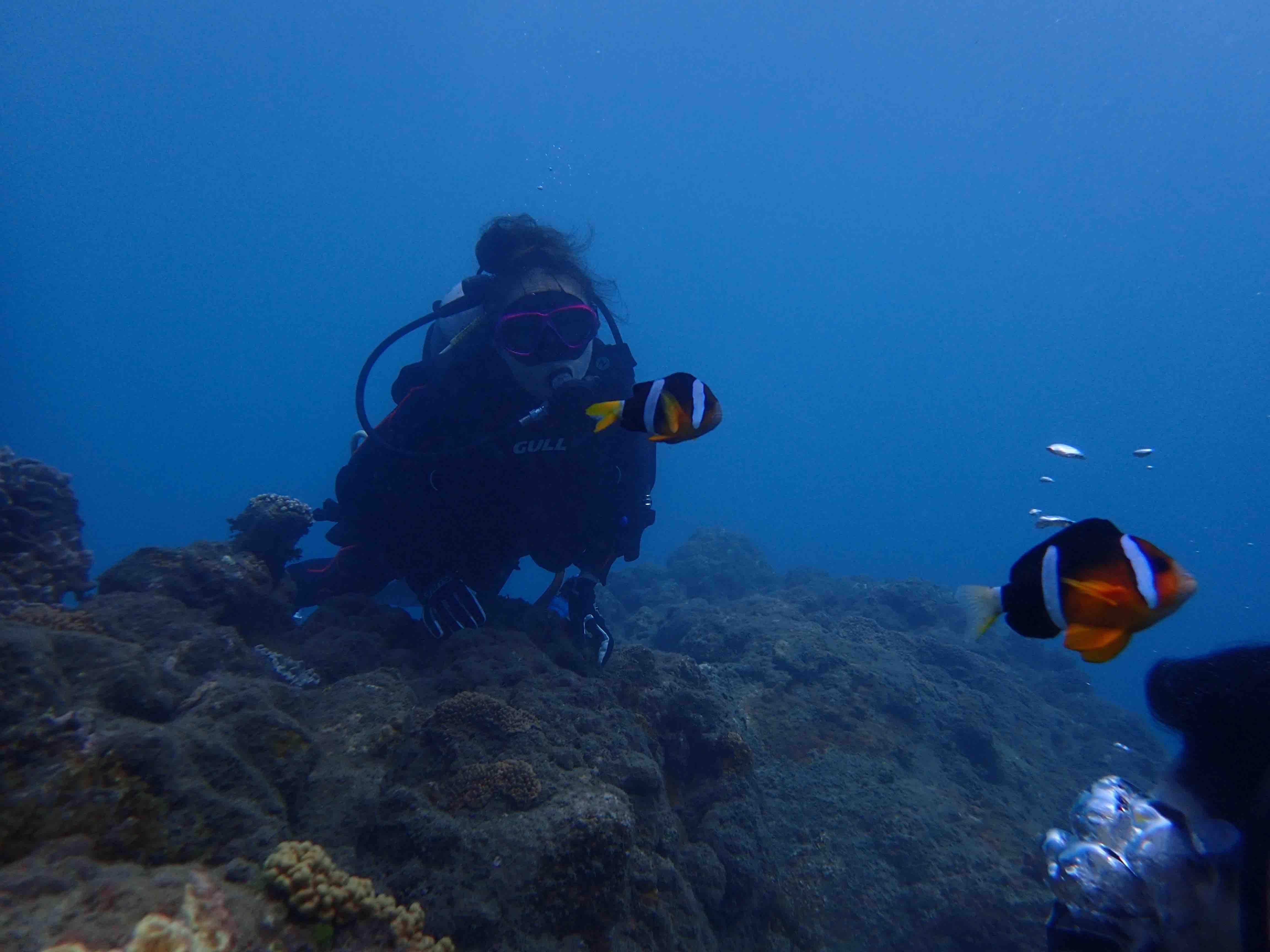 http://www.aquamarine-dive.net/blog/index.html/2015/10/08/0920.jpg