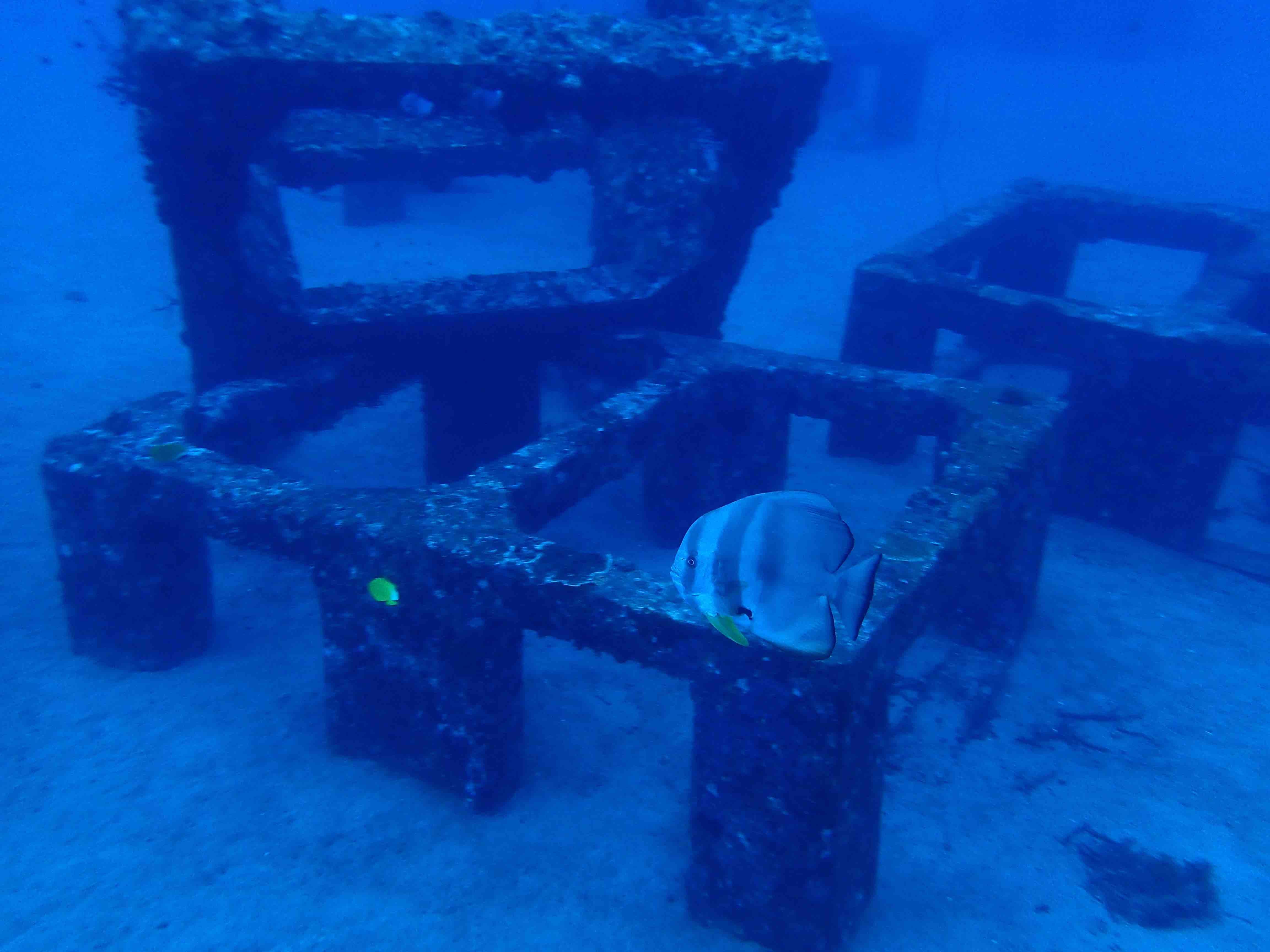 http://www.aquamarine-dive.net/blog/index.html/2015/10/09/0926.jpg