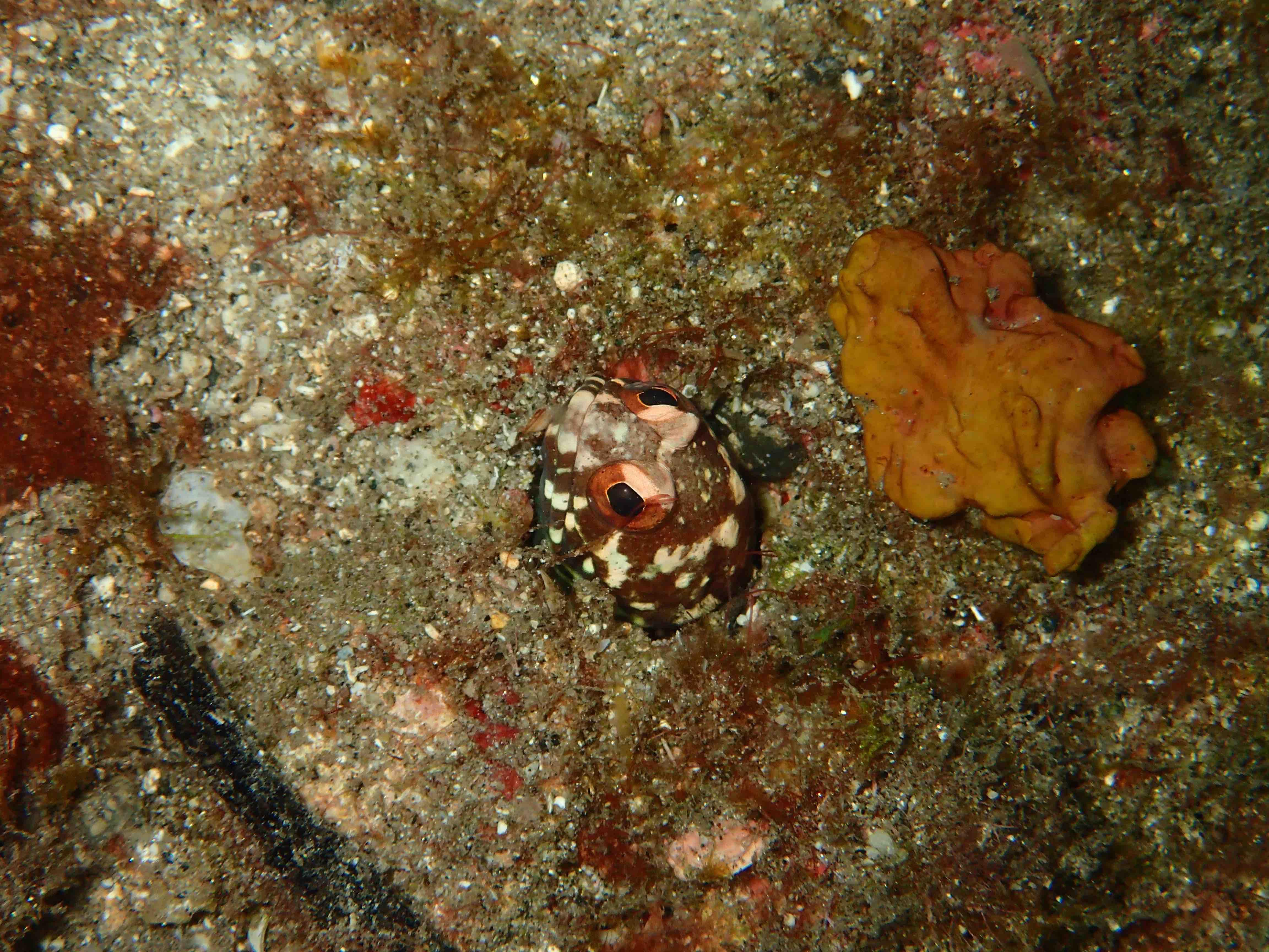 http://www.aquamarine-dive.net/blog/index.html/2015/10/09/0929.jpg