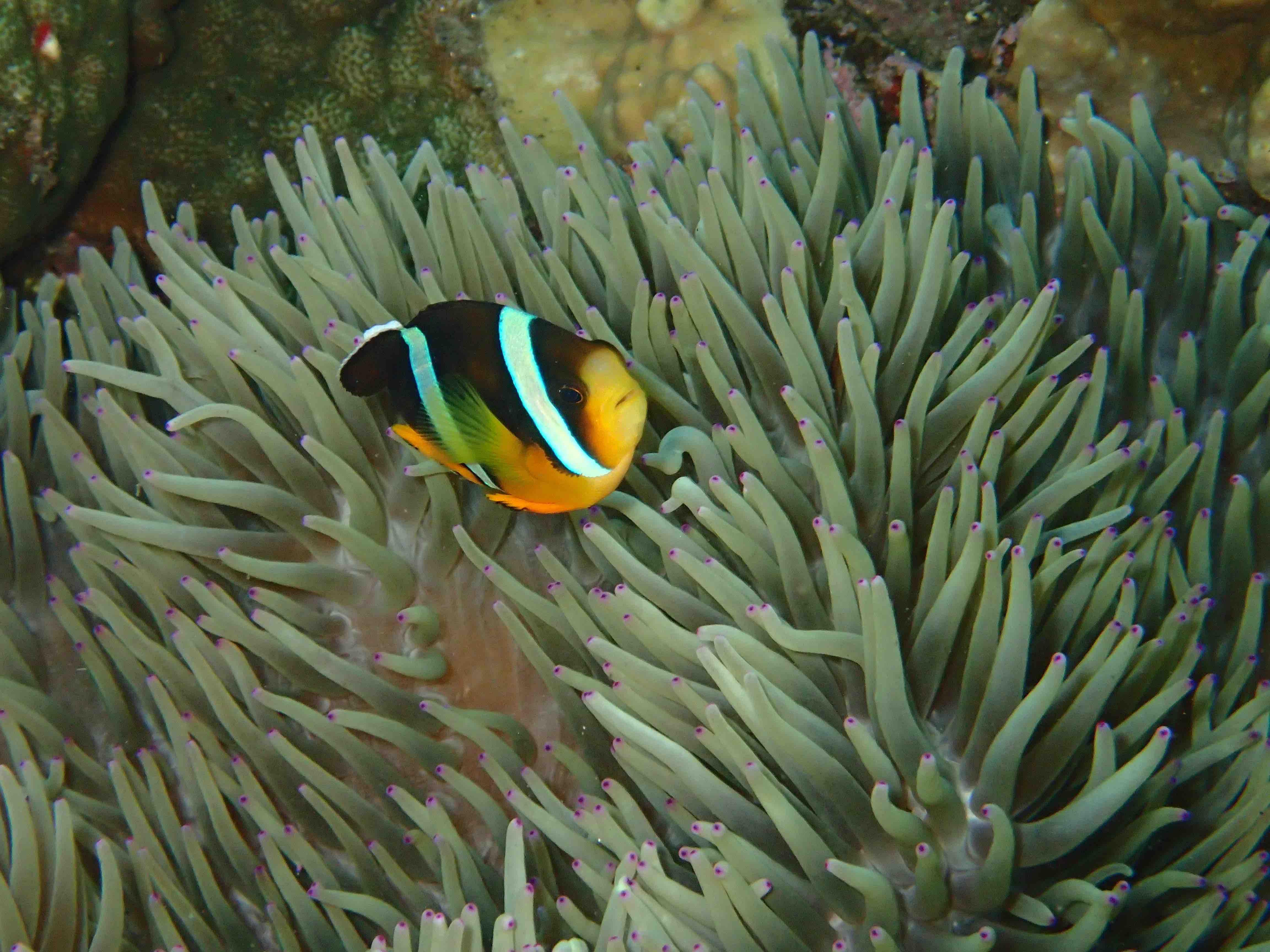 http://www.aquamarine-dive.net/blog/index.html/2016/05/15/P5240174.jpg