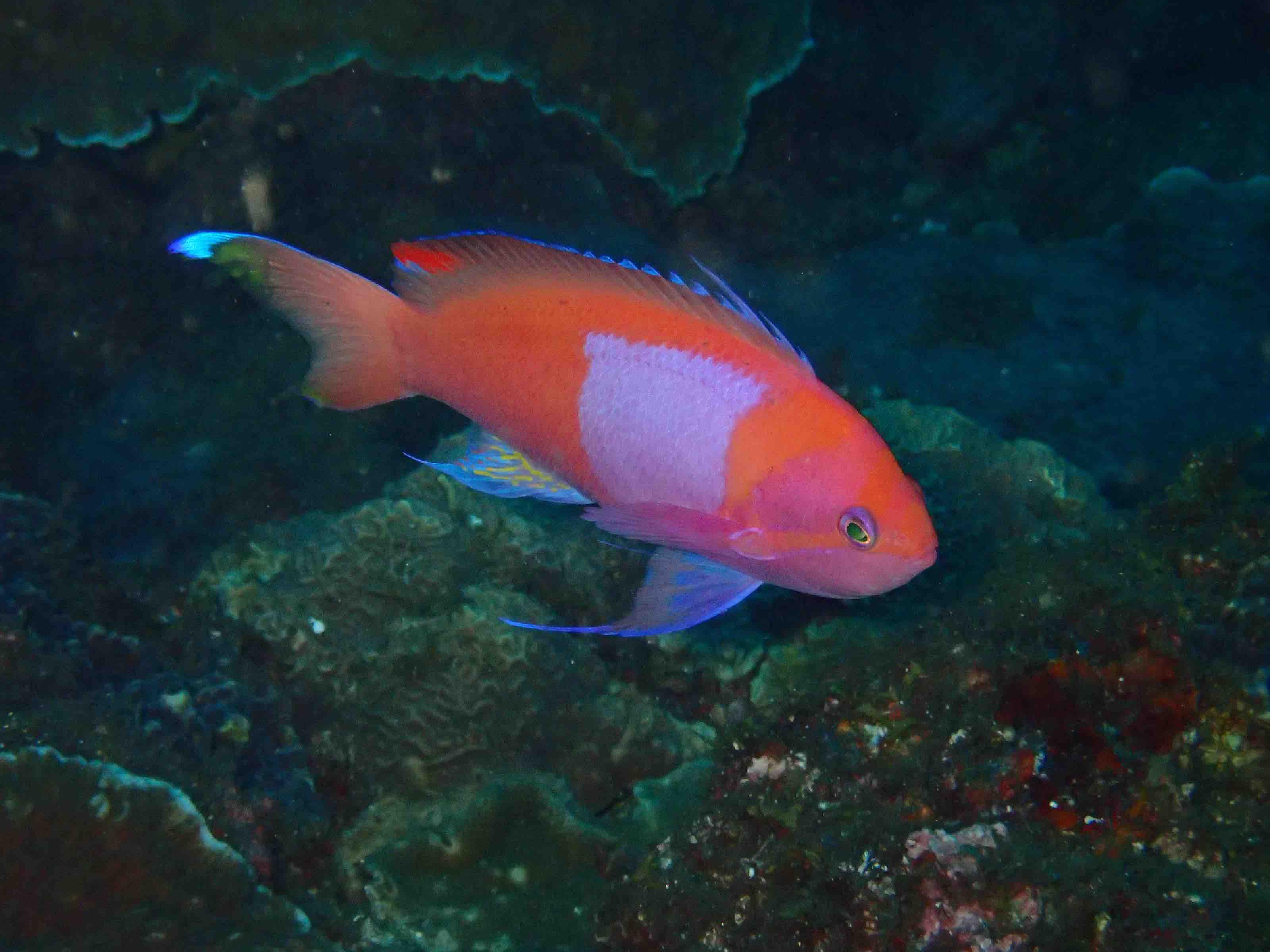 http://www.aquamarine-dive.net/blog/index.html/2016/07/15/P7150876.jpg