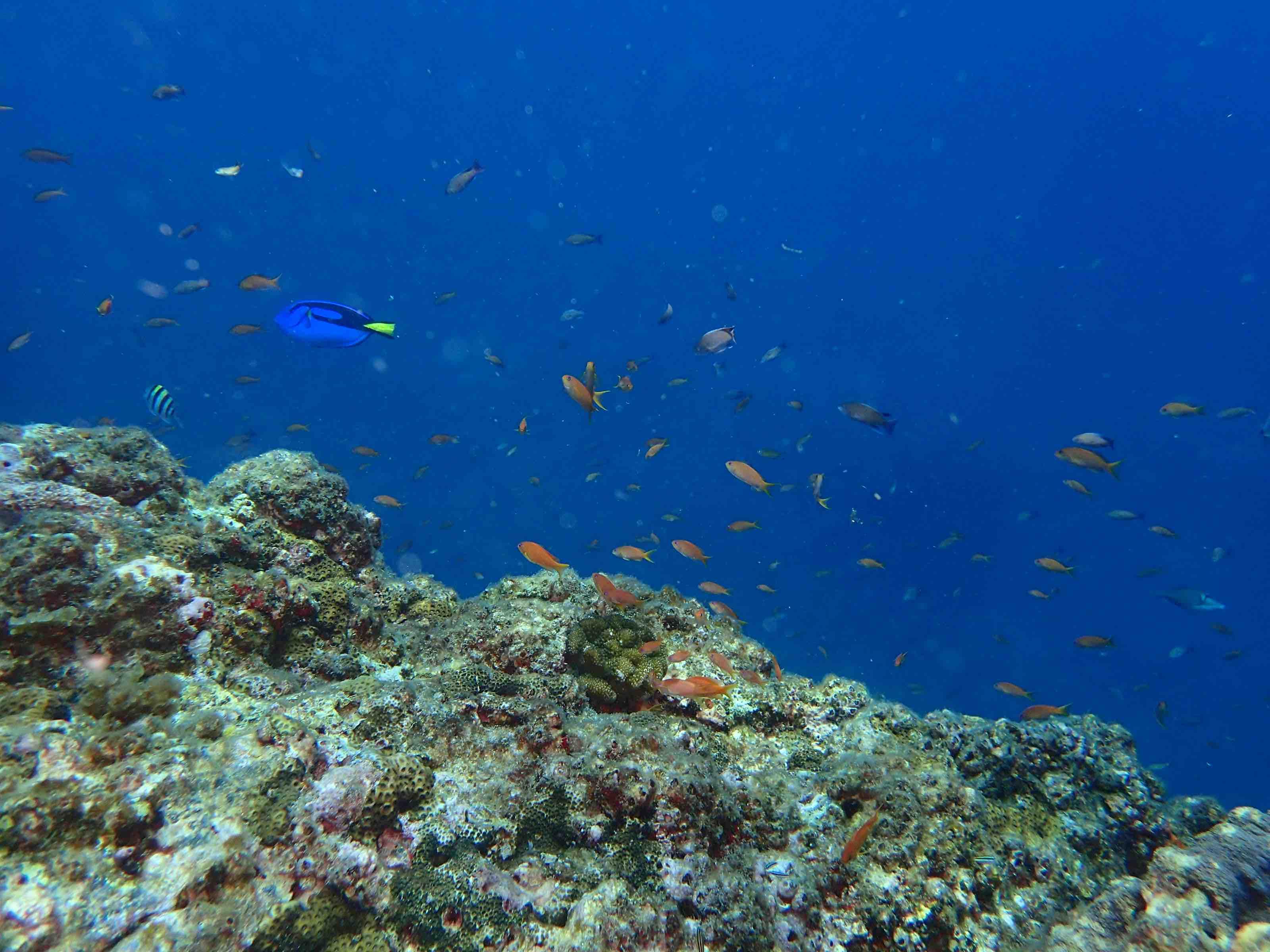 http://www.aquamarine-dive.net/blog/index.html/2017/07/18/P7151011.jpg
